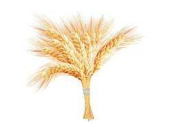 秋季丰收的小麦稻谷谷物插画设计