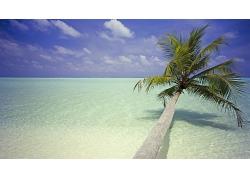 倒塌的棕榈树海滩海水景观