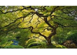 绿色曲折弯曲的树干丛林