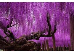 紫色的树干植物枝条
