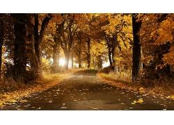 秋季树林道路