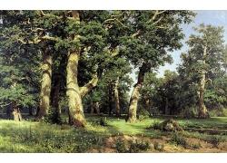 阳光下的森林树林