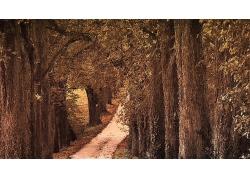 树林与小路