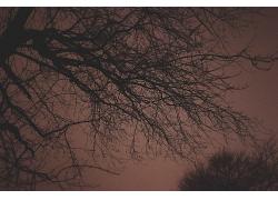 昏暗的树木枝条