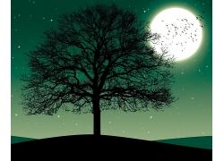 月圆与大树夜景