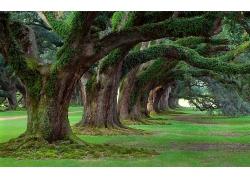粗壮长满青苔的树干
