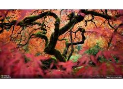 长满青苔的树干