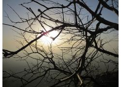 阳光与树枝