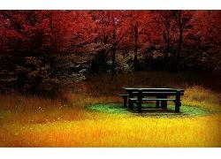 红树树木与草地上的木椅