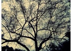 散开的树干树枝
