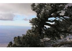 山顶的树与俯视平原