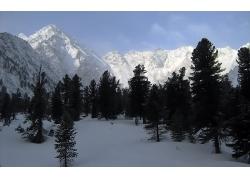 冬季雪山树木