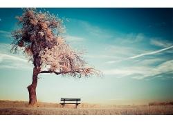 草地上孤独的树与木椅