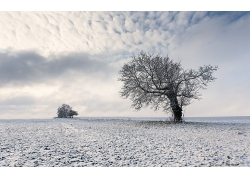 冬季雪地与枯树