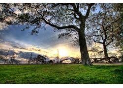 郊区草地与树木
