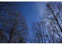 秋冬季节干枯的树林
