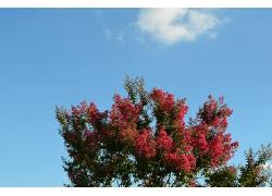 长满红花的树与天空