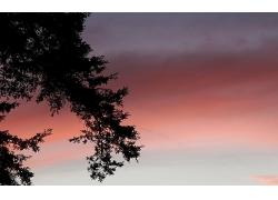 孤寂的树枝