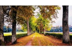 布满落叶的树林小路