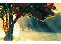 阳光穿透树木森林