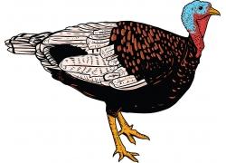 火鸡动物矢量图素材