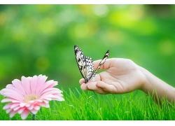 鲜花草地蝴蝶