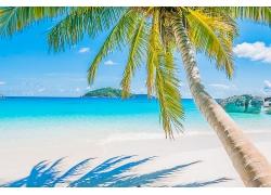 沙滩海洋棕榈树