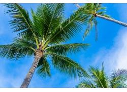 棕榈树鸟瞰图